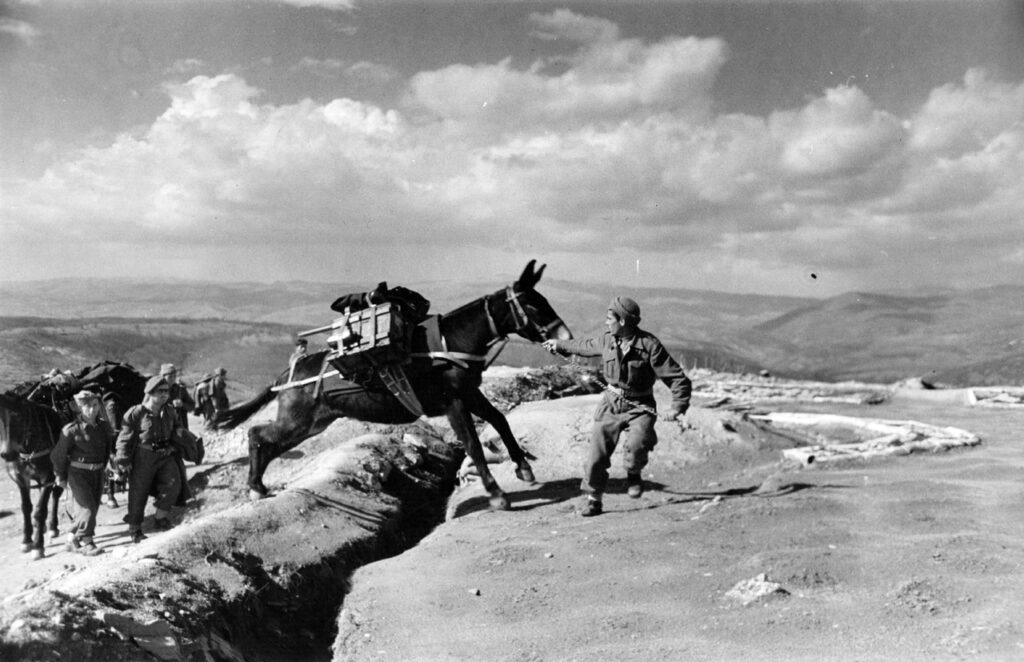 Гражданская война в Греции. 1948 год. Мул несет боеприпасы.
